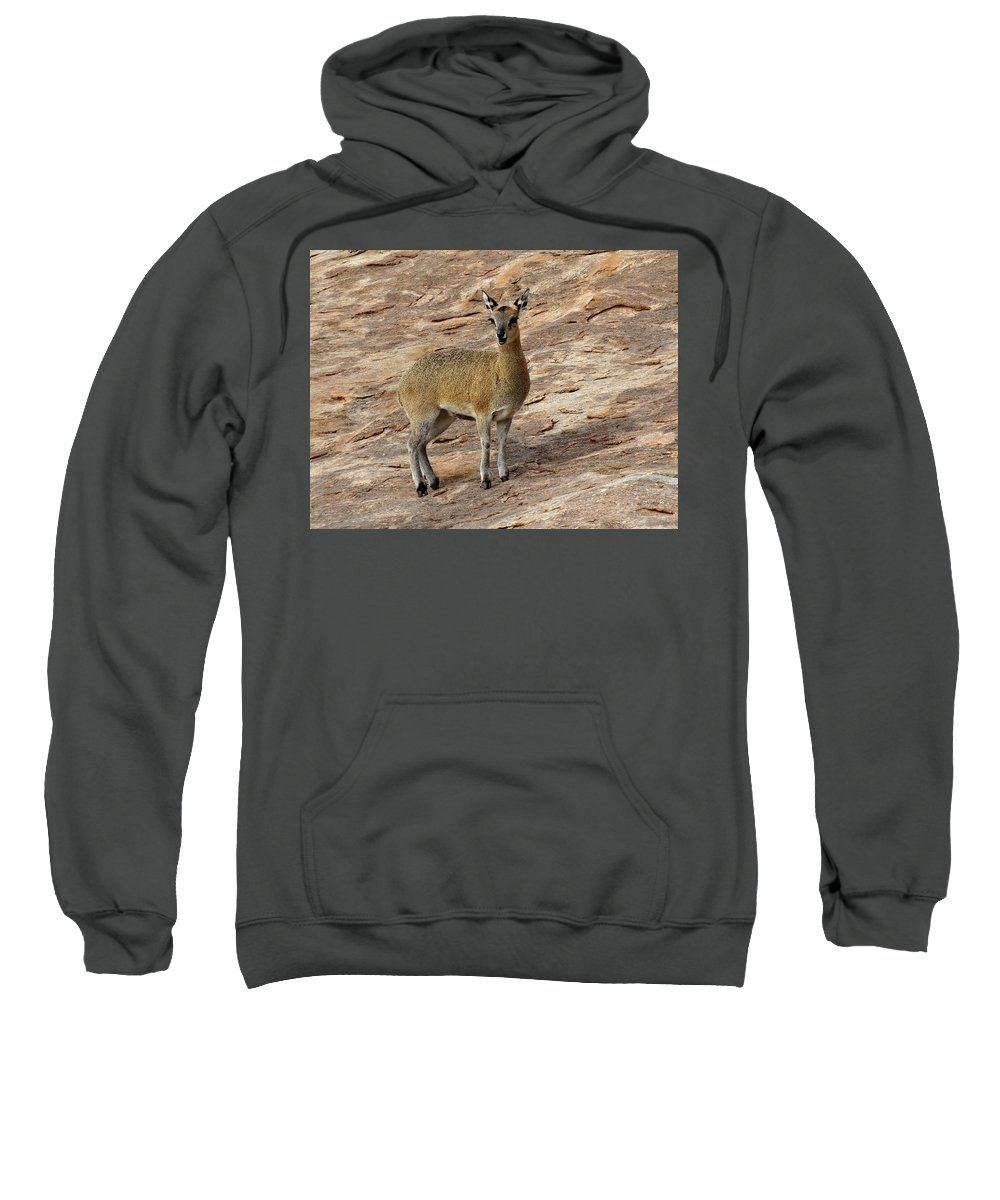 Africa Sweatshirt featuring the photograph Klipspringer by Athol Klieve