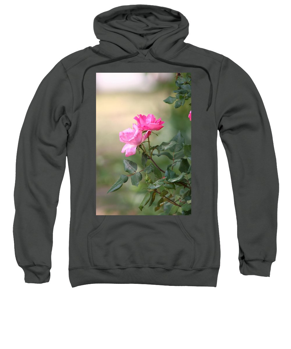 Flowers Sweatshirt featuring the photograph Knock Out Rose by Edward Gallegos
