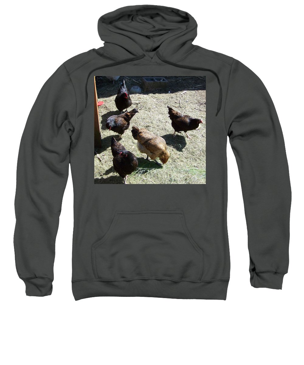 Hens Sweatshirt featuring the photograph Ladies Of The Pen by Laurie Kidd