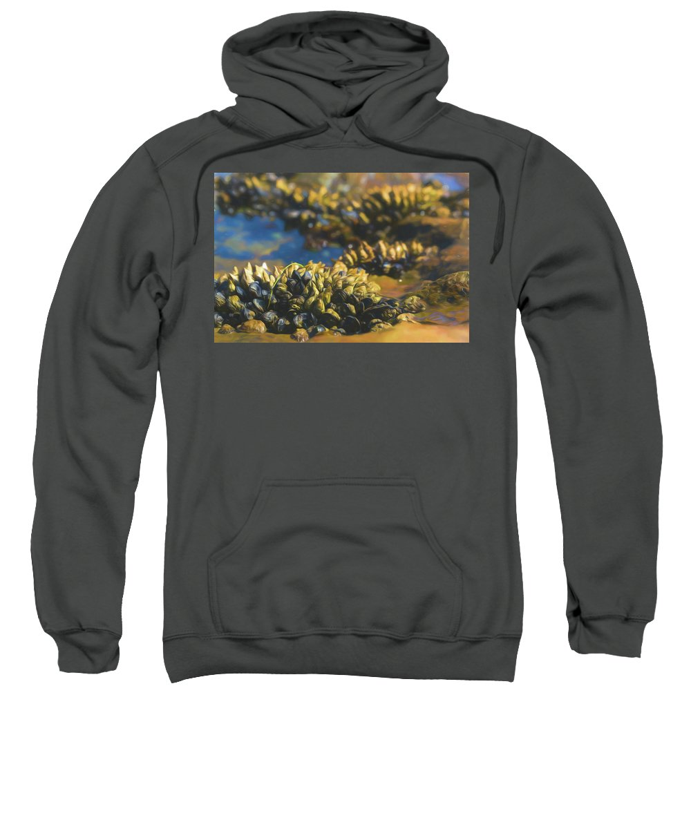 Black Turban Snail Sweatshirt featuring the photograph Laguna Beach Tide Pool Pattern 4 by Scott Campbell