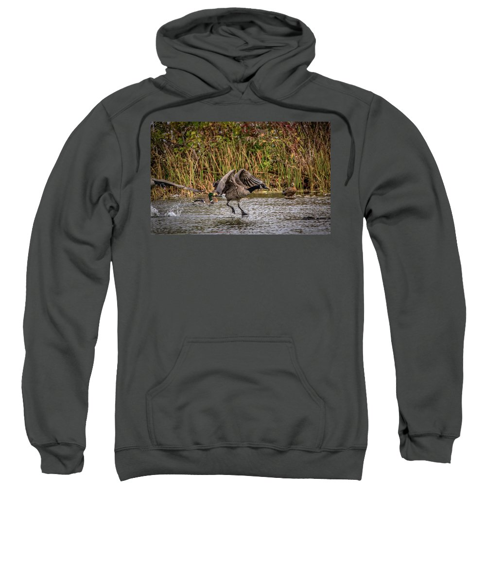 Canadian Goose Sweatshirt featuring the photograph Landing Gear Down by Ray Congrove
