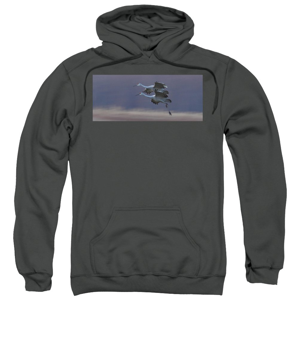 Sandhill Cranes Birds Photography Photograph Wildlife Flying Flight Sweatshirt featuring the photograph Landing Gear Down by Shari Jardina