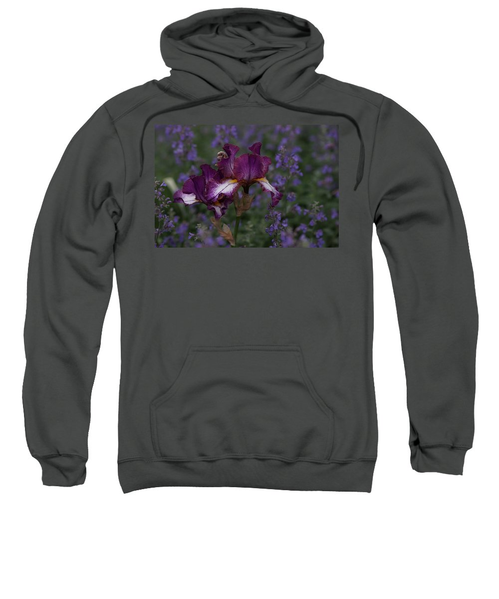 Purple Sweatshirt featuring the photograph Lavender Field by Carrie Goeringer