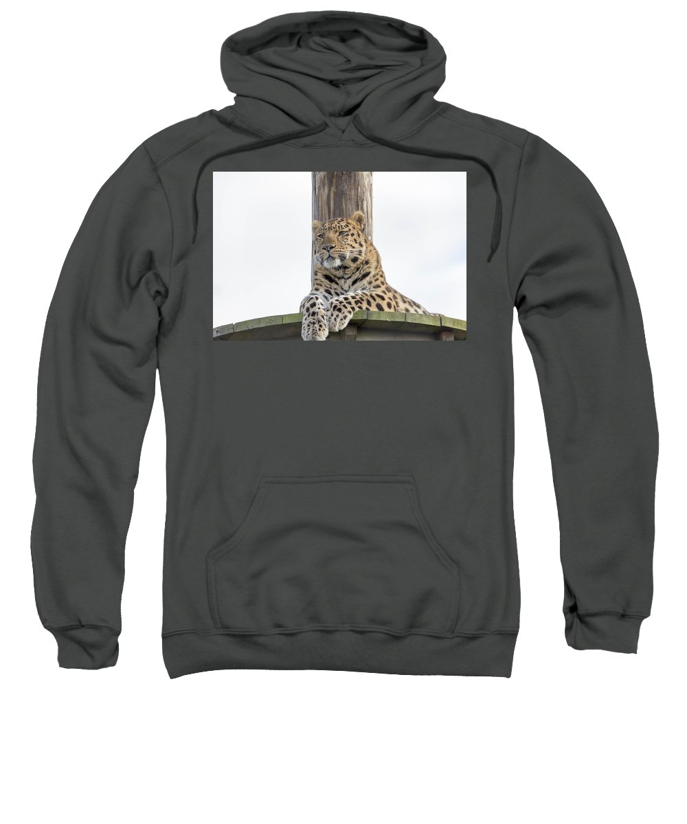 Big Cats Sweatshirt featuring the photograph Lazy Leopard by James McHugh