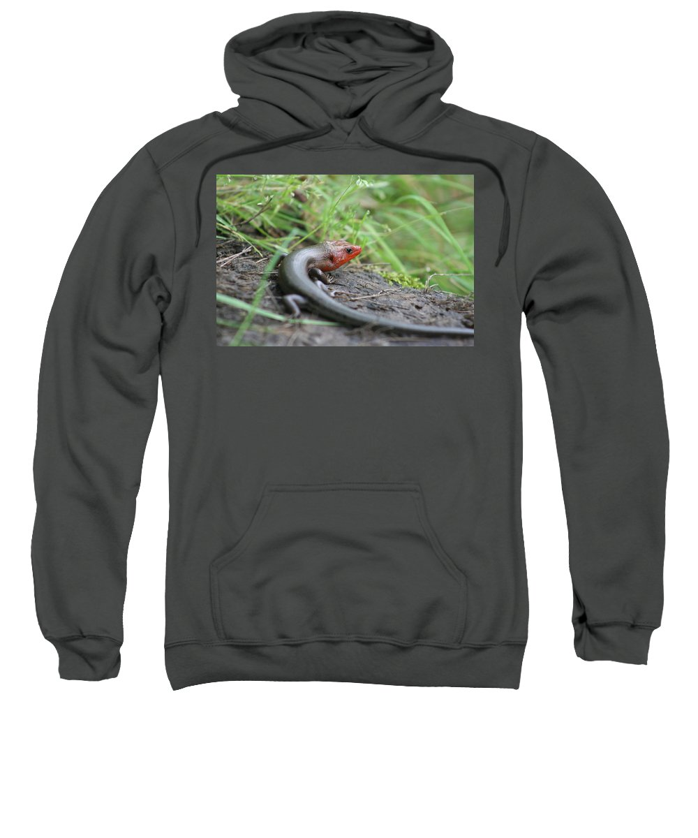 Lizards Sweatshirt featuring the photograph Lazy Lizard by Lisa Stanley