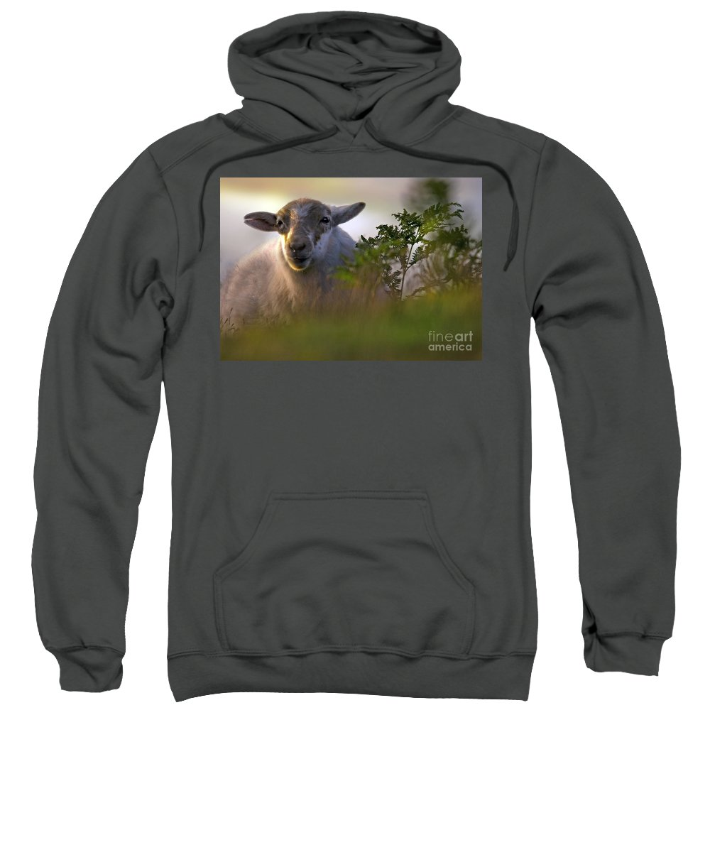 Sweatshirt featuring the photograph Lazy Sunny Afternoon by Angel Ciesniarska