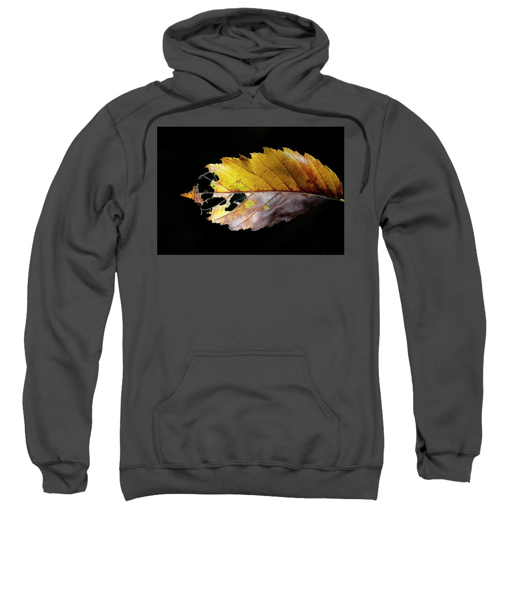 Leaf Sweatshirt featuring the photograph Leaf by Bibzie Priori