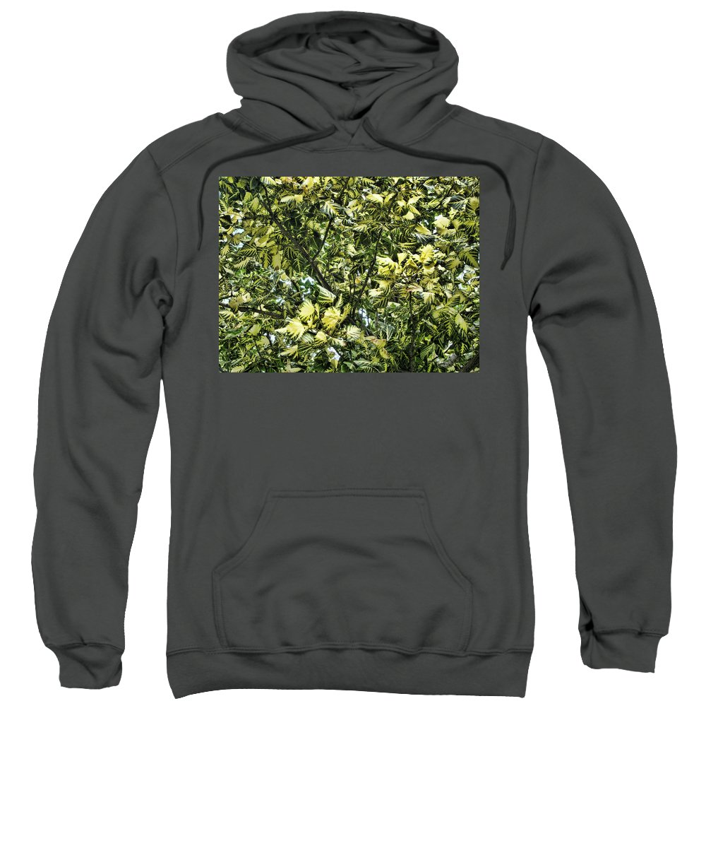 Leaves Sweatshirt featuring the photograph Leafy by Douglas Barnard
