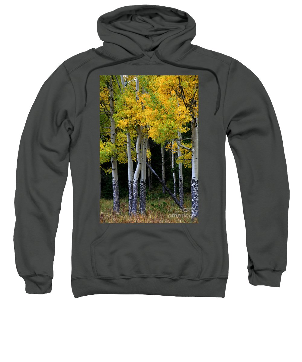 Aspens Sweatshirt featuring the photograph Leaning Aspen by Timothy Johnson