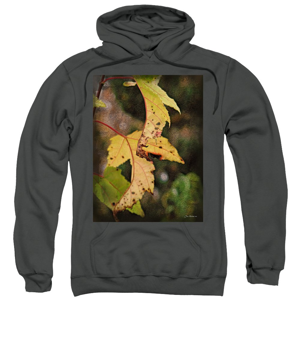 Autumn Sweatshirt featuring the photograph Leaves And Autumn by Joan Minchak