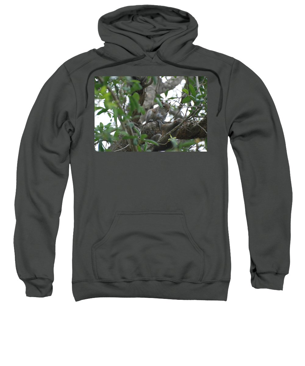 Squirrel Sweatshirt featuring the photograph Lending A Helping Hand by Rob Hans