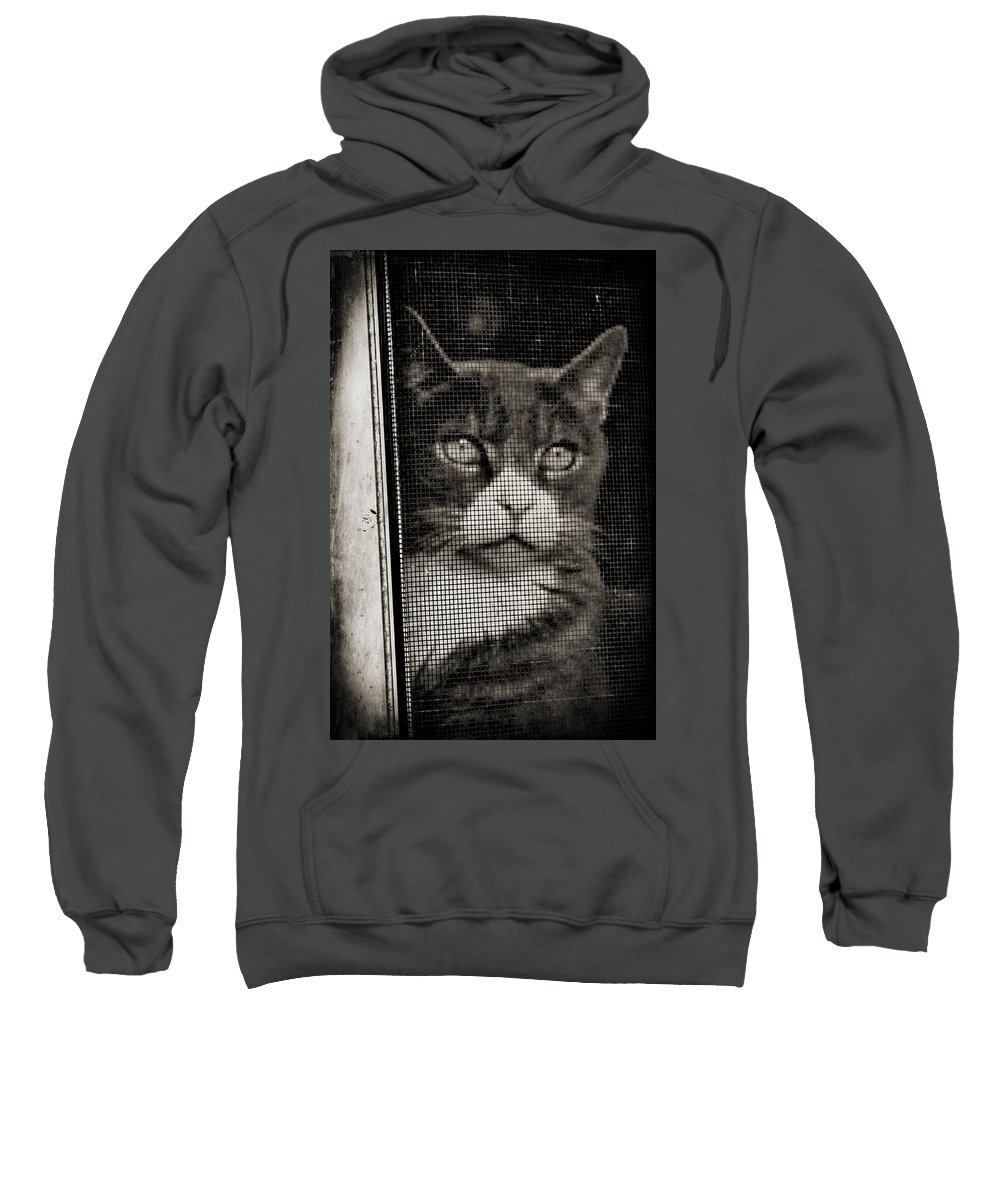 Feline Sweatshirt featuring the photograph Let Me Out by Wendy Gertz