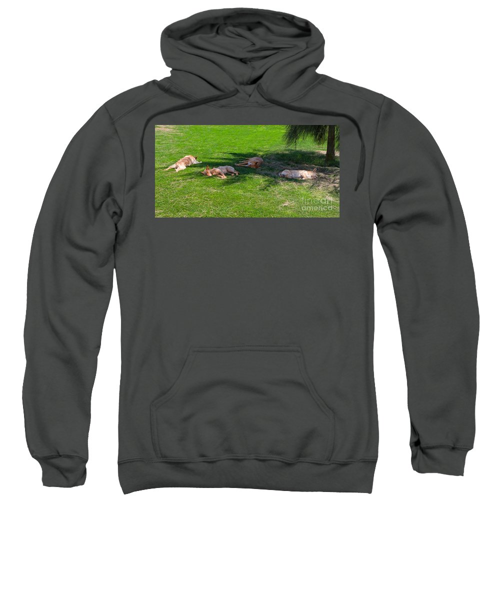 Dogs Sweatshirt featuring the photograph Let Sleeping Dogs Lie by Louise Heusinkveld