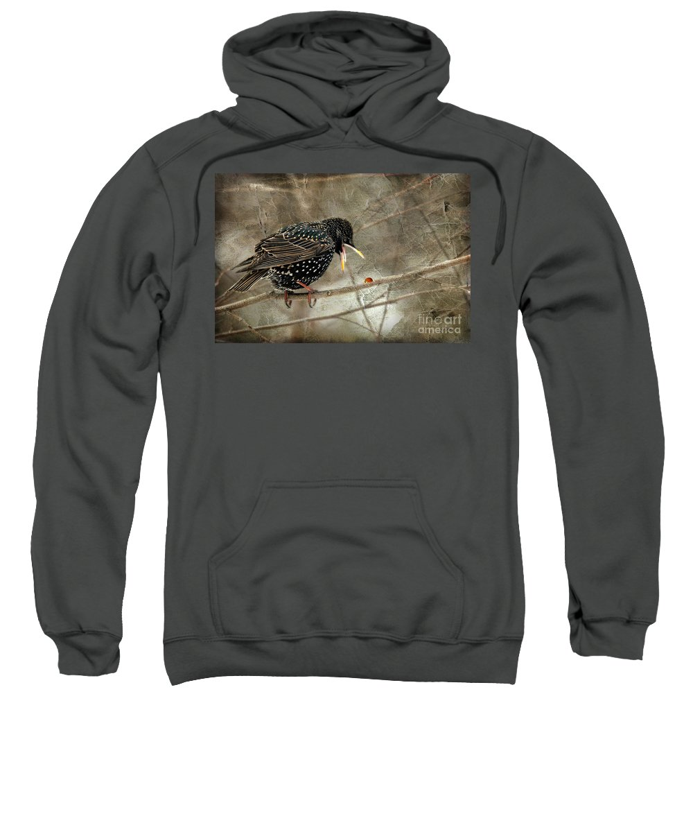 Bird Sweatshirt featuring the photograph Let's Do Lunch by Lois Bryan
