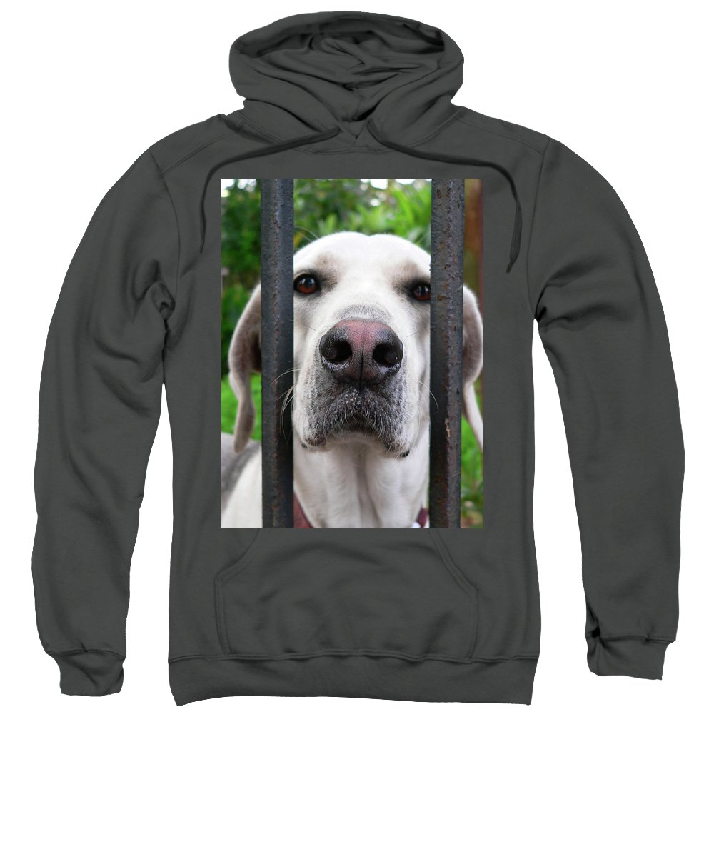 Dog Sweatshirt featuring the photograph Lets Go For A Walk by Angela Wright