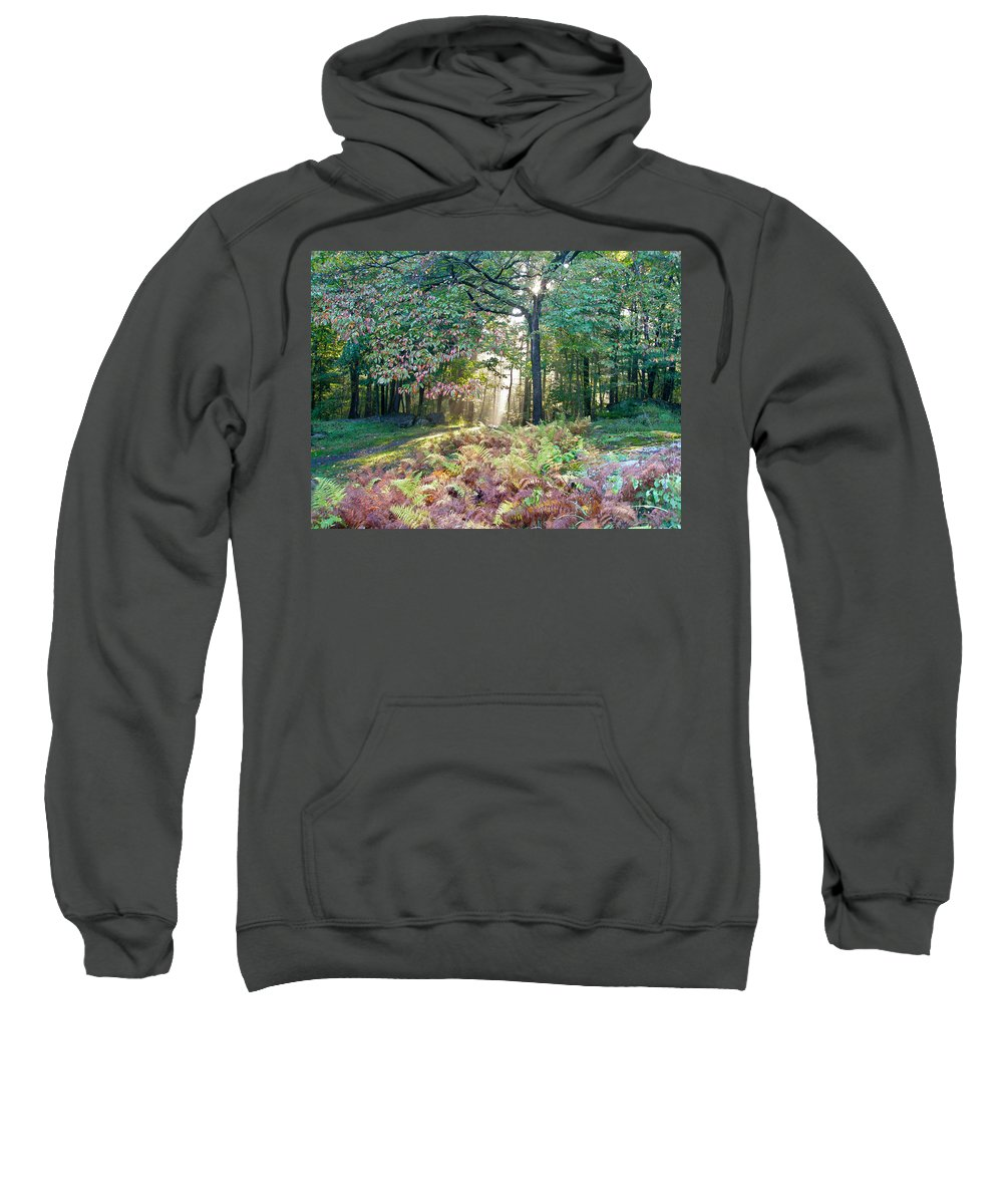 Light Sweatshirt featuring the photograph Light In The Forest by Mother Nature