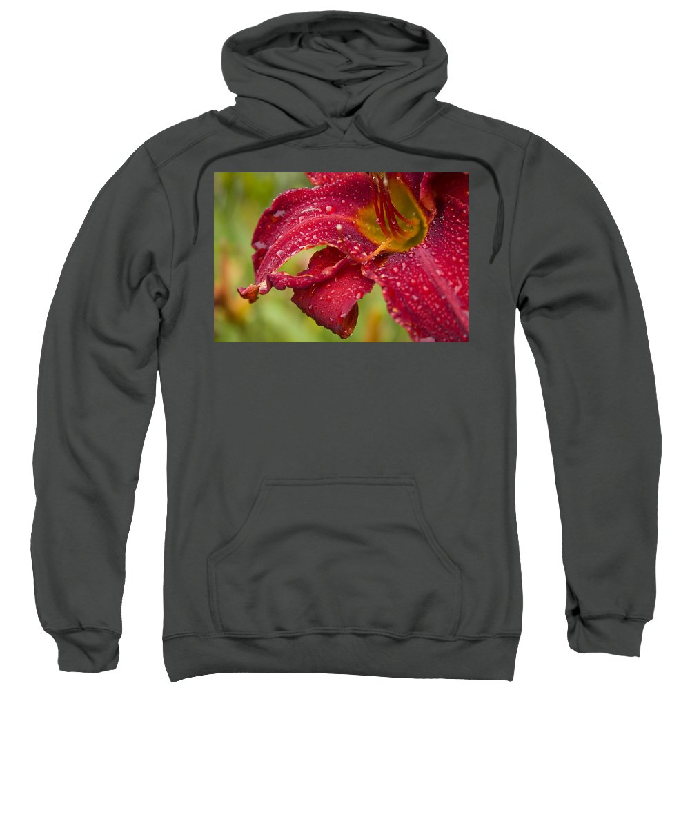 Lilly Flower Bright Garden Rain Drop Droplete Red Dark Yellow Water Sweatshirt featuring the photograph Lilly After Rain by Andrei Shliakhau