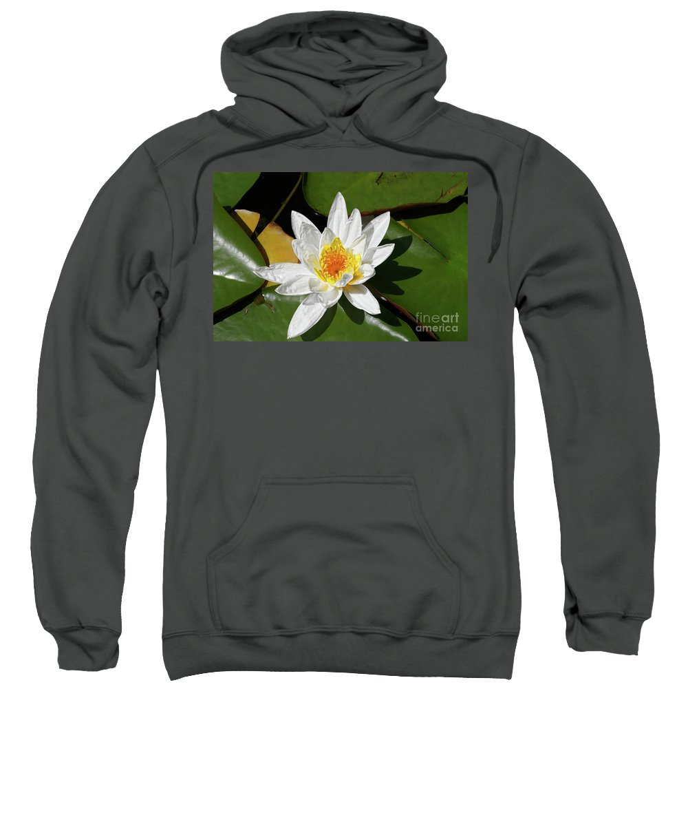Ily Sweatshirt featuring the photograph Lily Floating On Pond IIi by Mariola Bitner