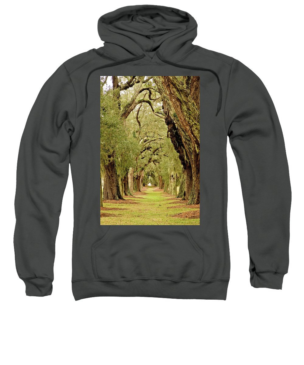 Forest Sweatshirt featuring the photograph Line Of Oak Trees To Distance by Darryl Brooks