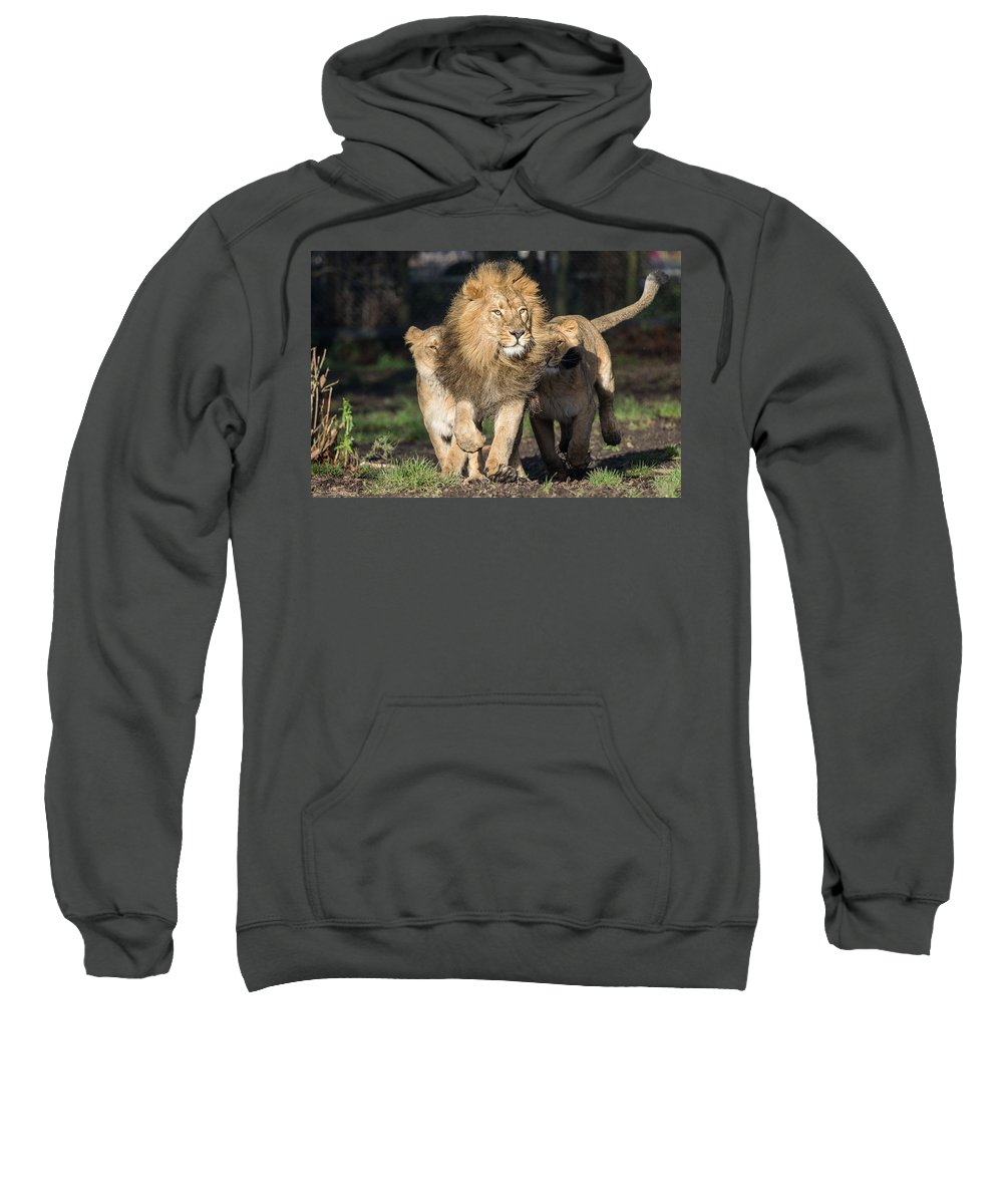 Lion Sweatshirt featuring the digital art Lion by Bert Mailer