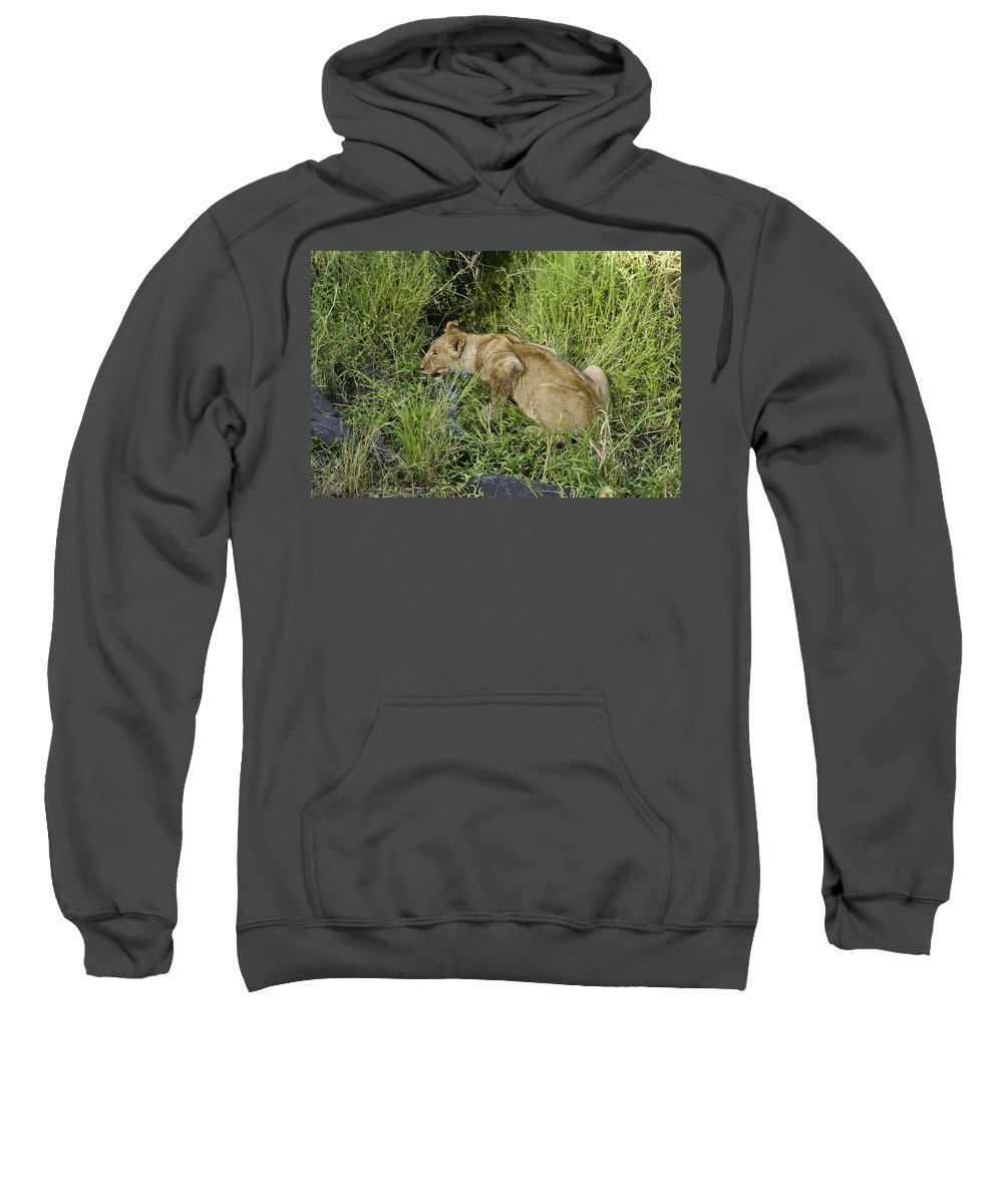 Africa Sweatshirt featuring the photograph Lion In A Cool Glade by Michele Burgess