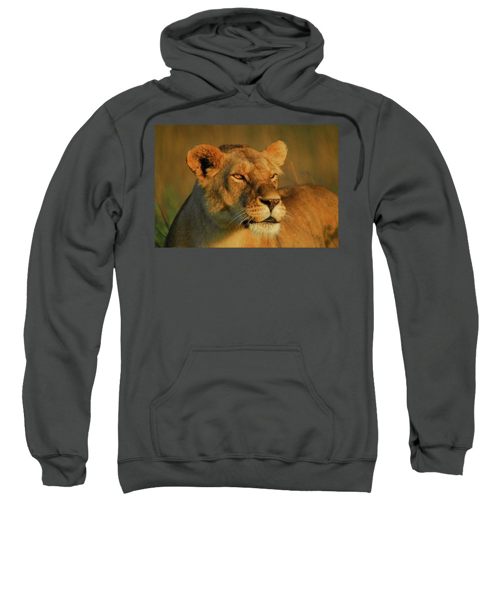 Kenya Sweatshirt featuring the photograph Lioness At Maasai Sunet by Owen Ashurst