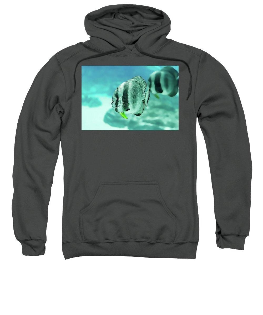 Aquarium Sweatshirt featuring the photograph Little Angels by Janet Fikar