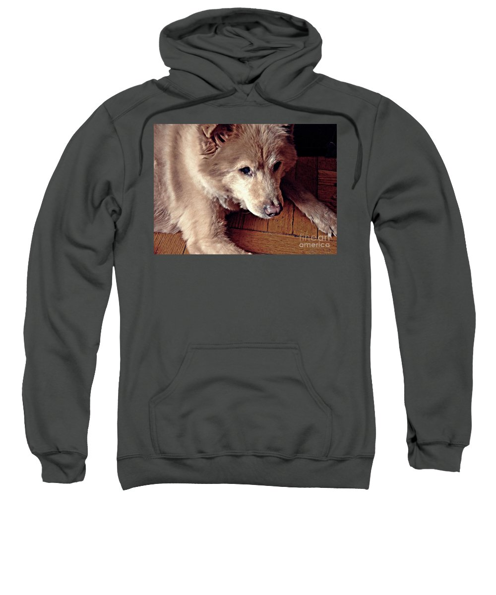 Dog Sweatshirt featuring the photograph Little Bear In Old Age by Sarah Loft