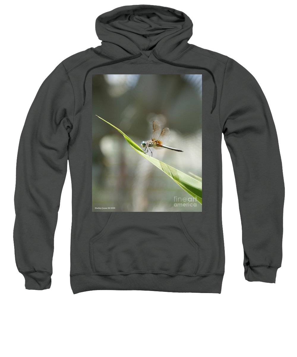 Dragonfly Sweatshirt featuring the photograph Little Dragon by Shelley Jones