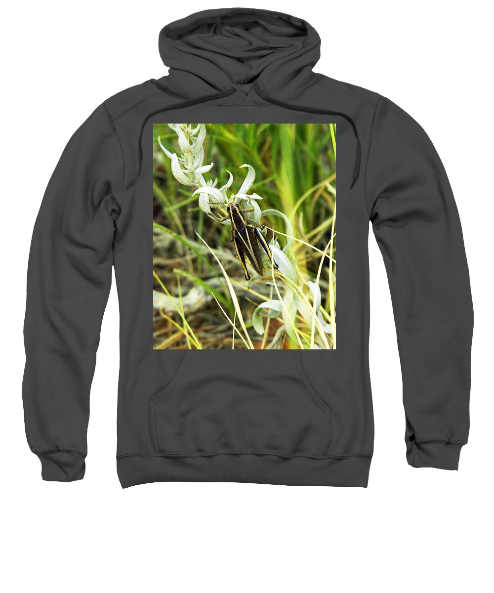 Grasshopper Sweatshirt featuring the photograph Little Grasshopper by Marilyn Hunt