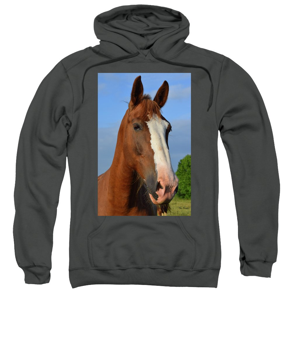 Horse Sweatshirt featuring the photograph Little Mare by Chris Busch