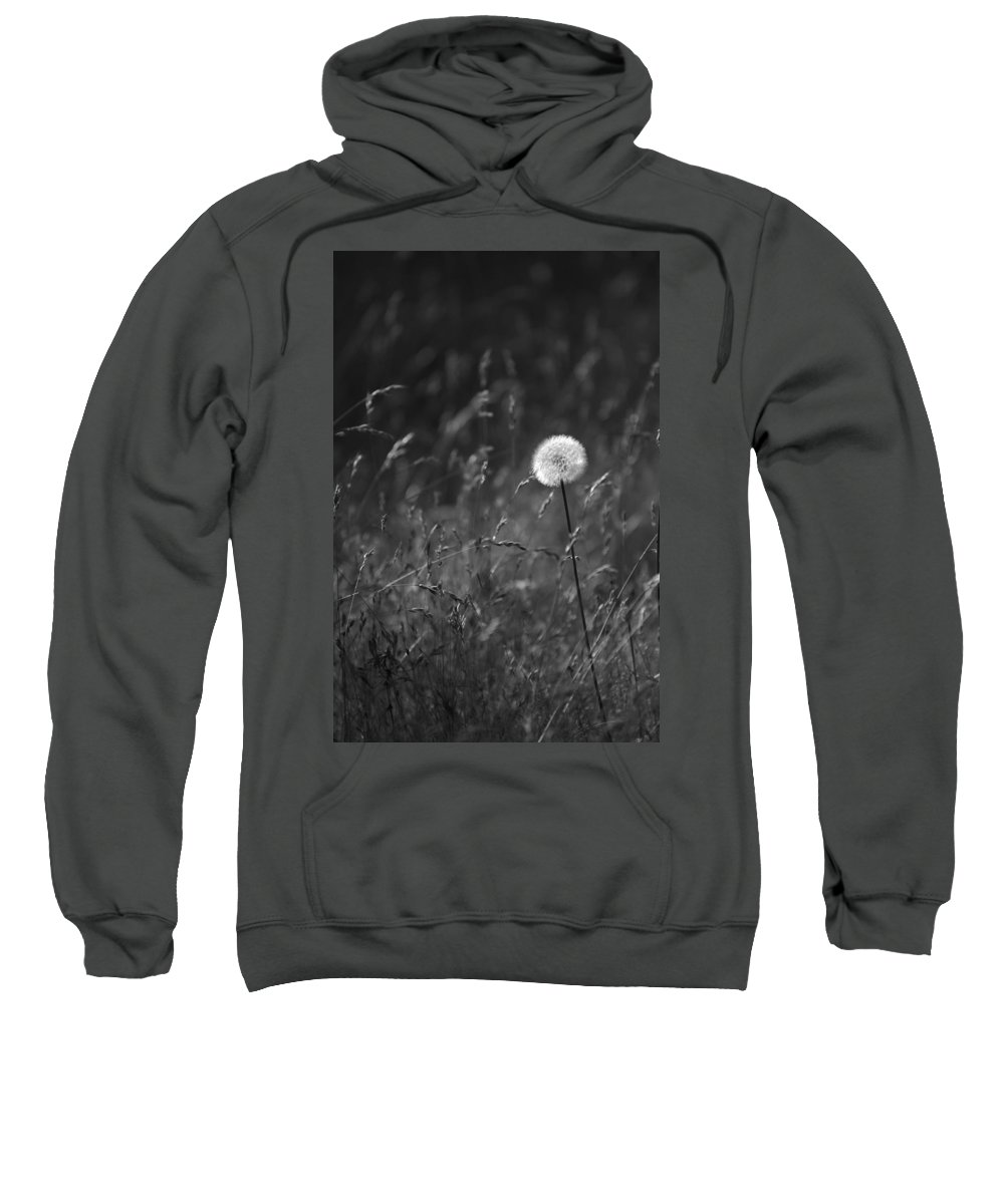 Botanical Sweatshirt featuring the photograph Lone Dandelion Black And White by Jill Reger