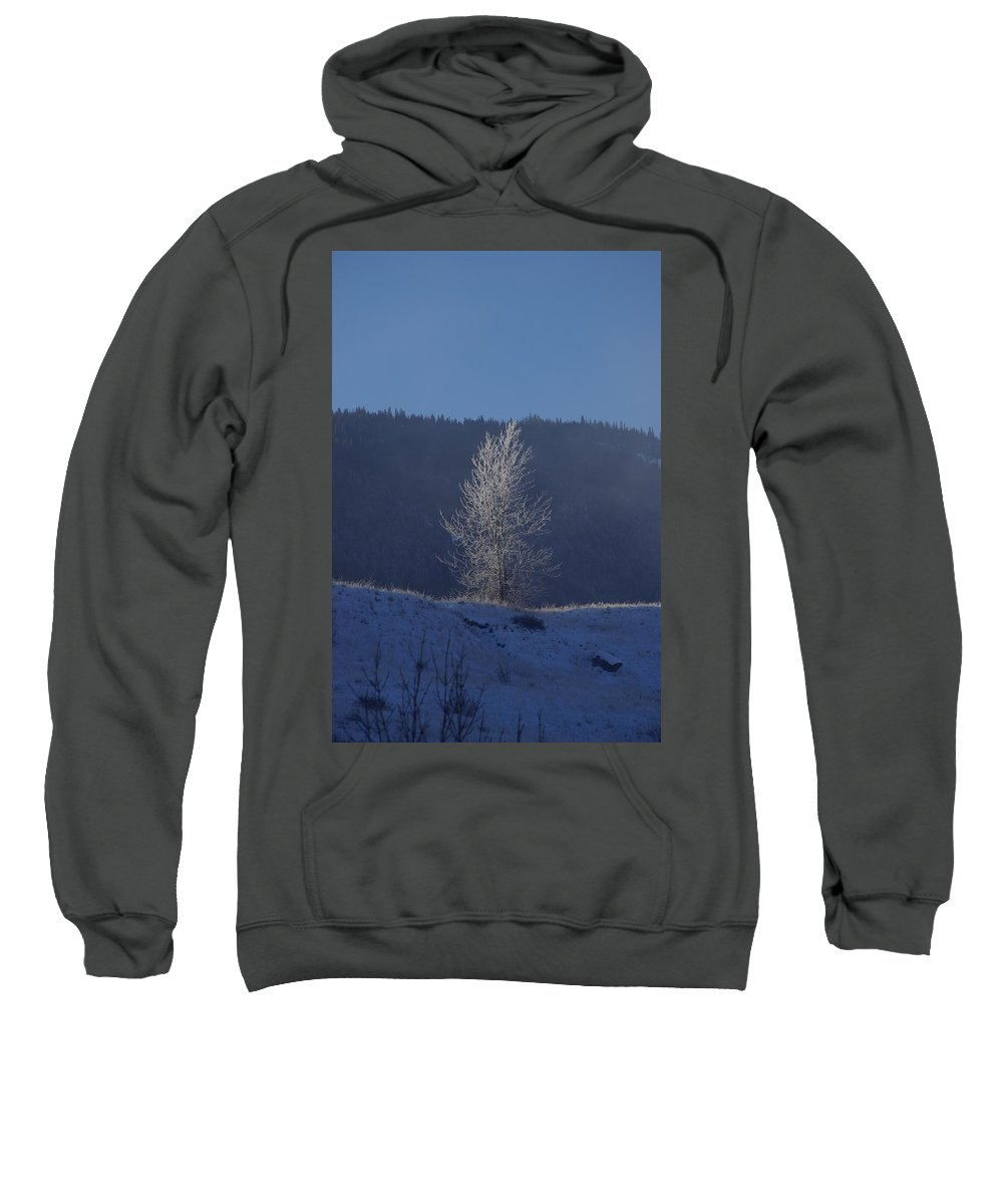 Lonely Sweatshirt featuring the photograph Lonely Frosty Tree by Cindy Johnston