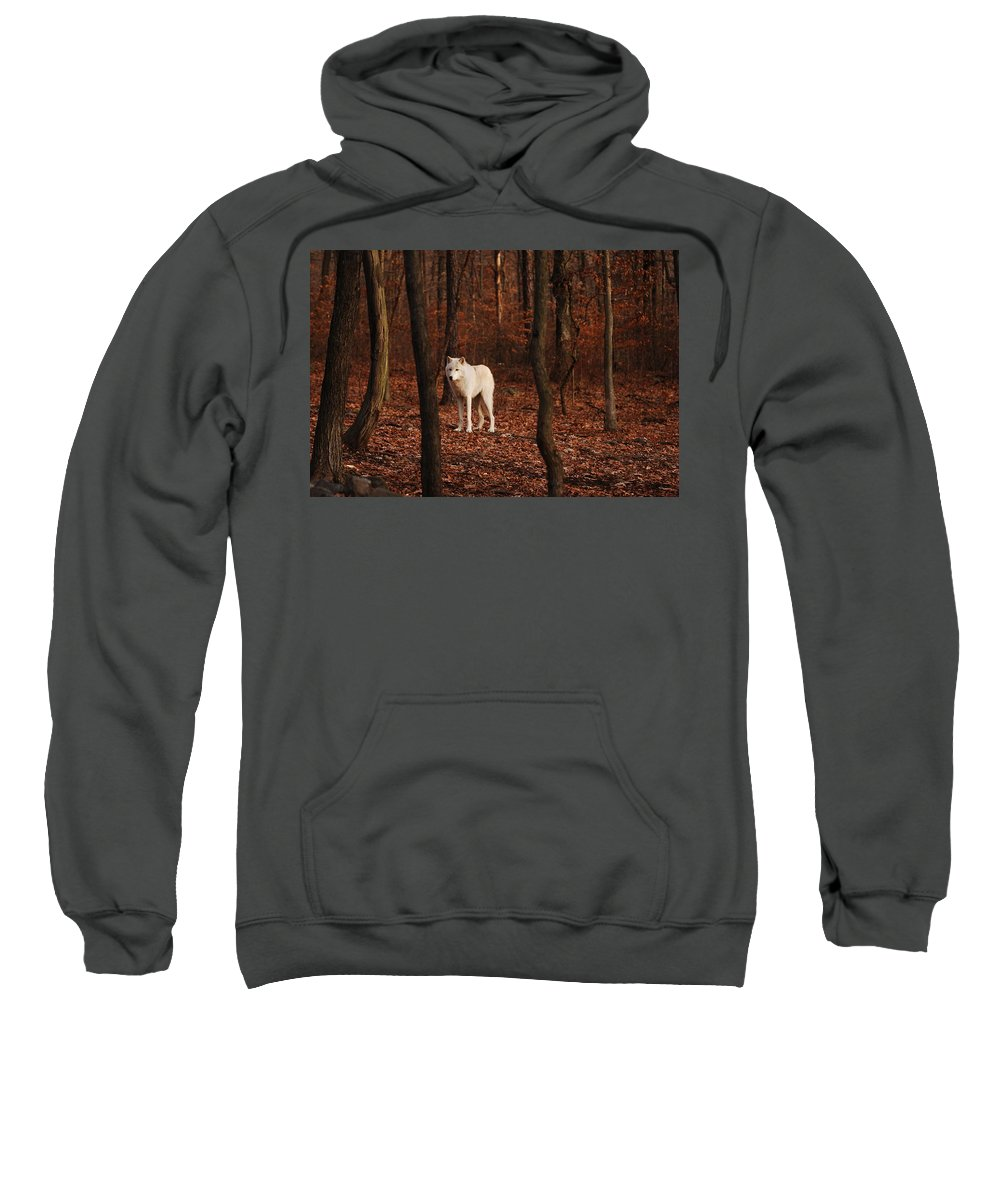 Wolf Sweatshirt featuring the photograph Loner by Lori Tambakis