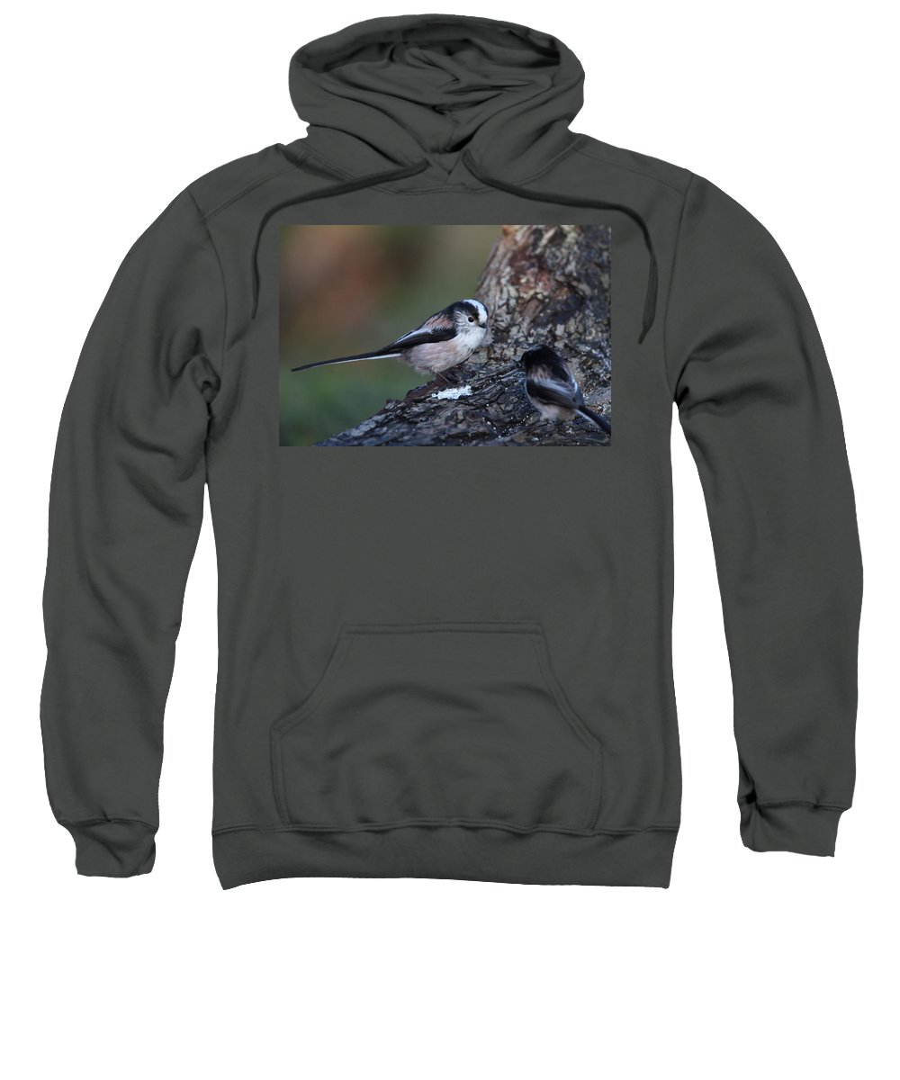 Long Tailed Tit Sweatshirt featuring the photograph Long-tailed Tit by Bob Kemp