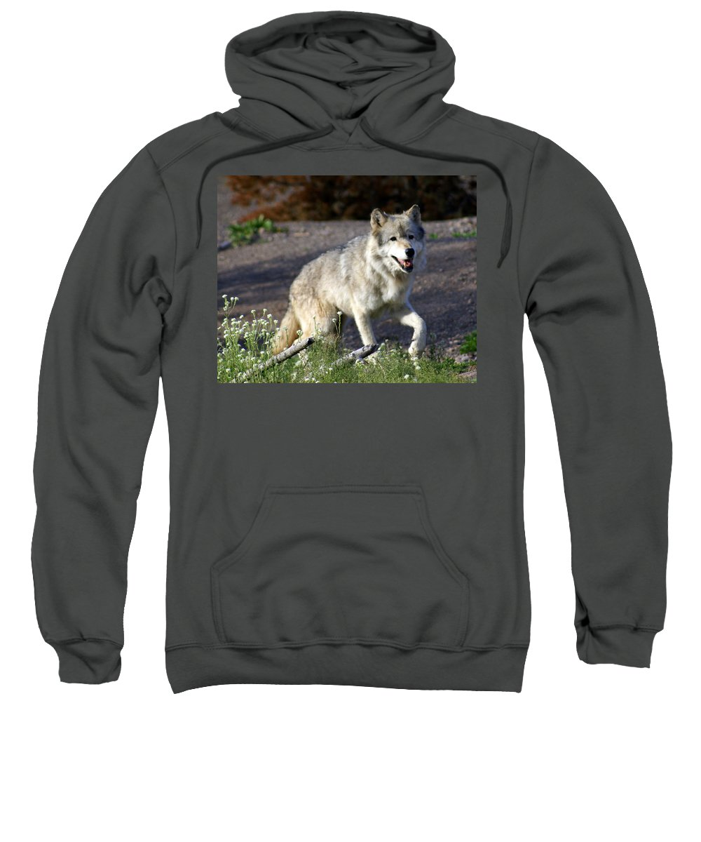 Wildlife Sweatshirt featuring the photograph Lonly Wolf by Marty Koch