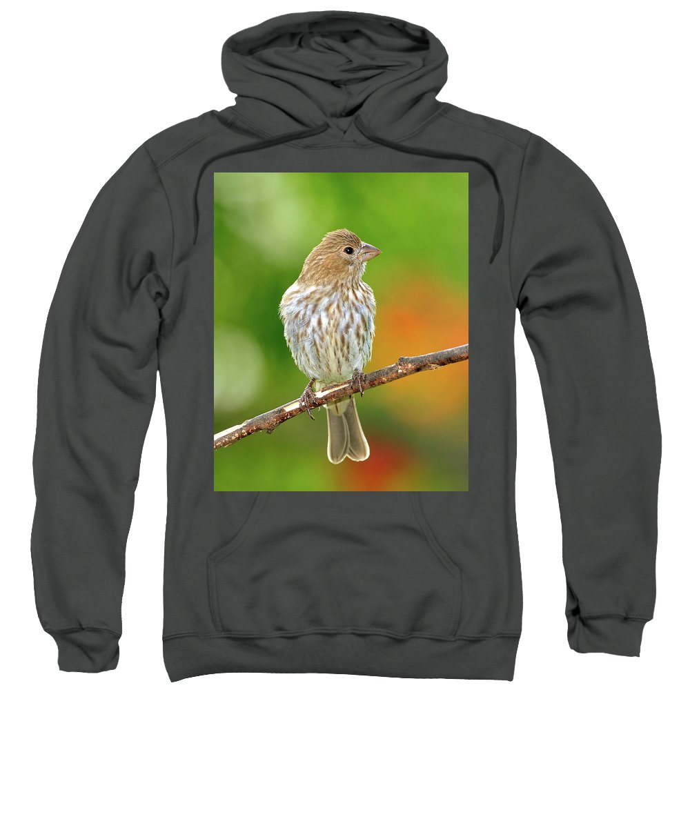 Finch Sweatshirt featuring the photograph Lookin' At You by Betty LaRue