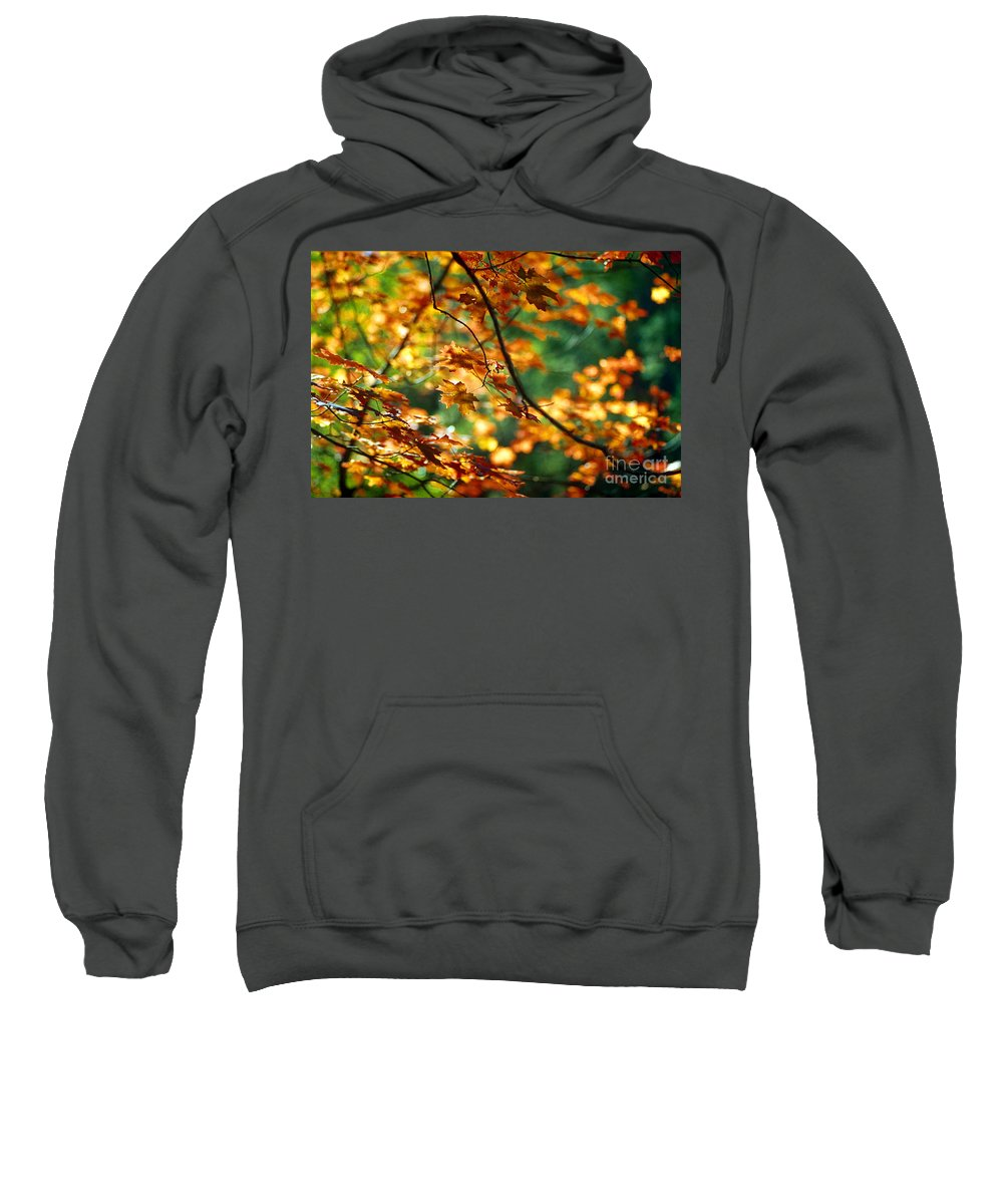 Fall Color Sweatshirt featuring the photograph Lost In Leaves by Kathy McClure