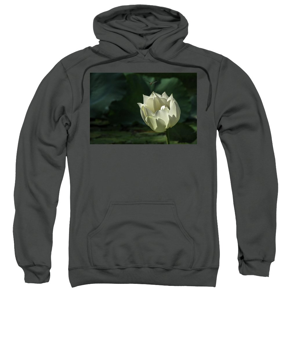 Asia Sweatshirt featuring the photograph Lotos And Dragonfly by Peteris Vaivars