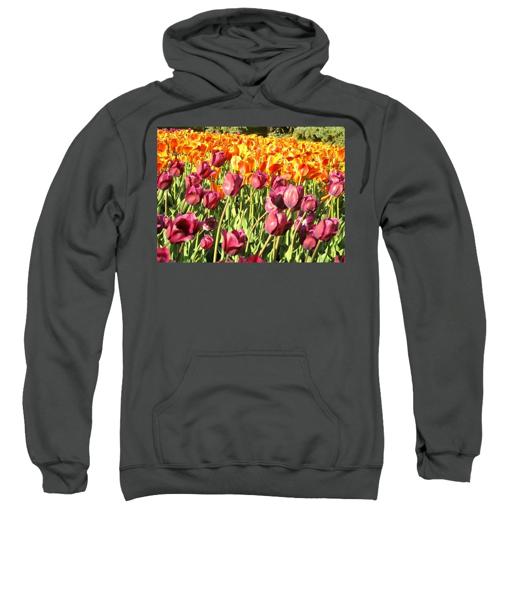 Tulips Sweatshirt featuring the photograph Lots Of Tulips by Ian MacDonald