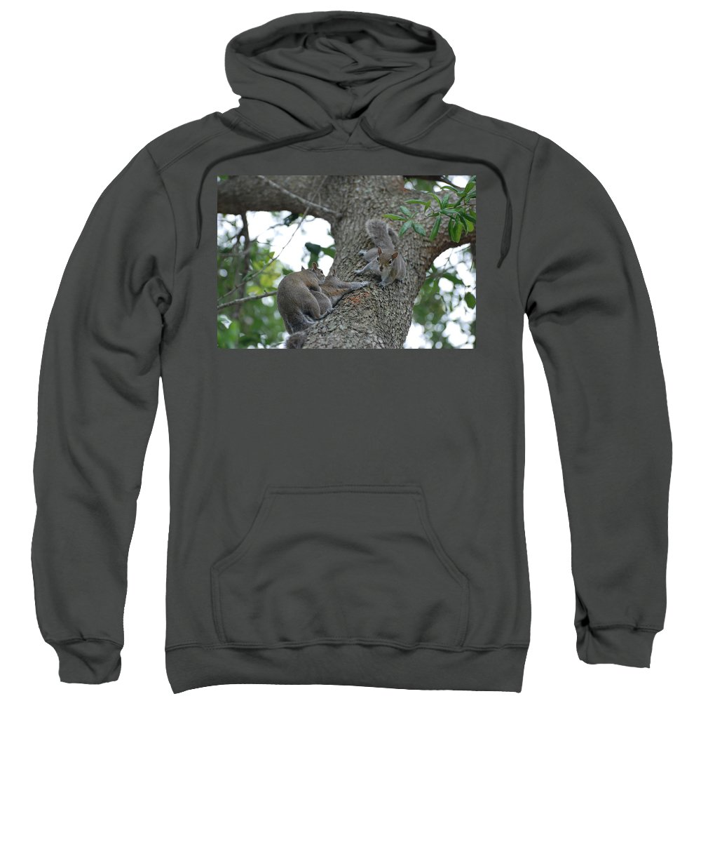 Squirrel Sweatshirt featuring the photograph Luck Be A Lady by Rob Hans