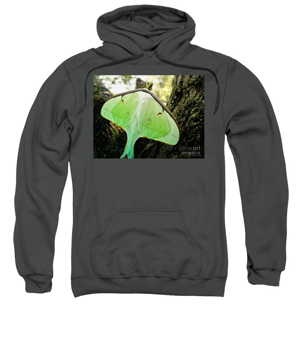 Macro Sweatshirt featuring the photograph Luna Moth No. 3 by Todd A Blanchard
