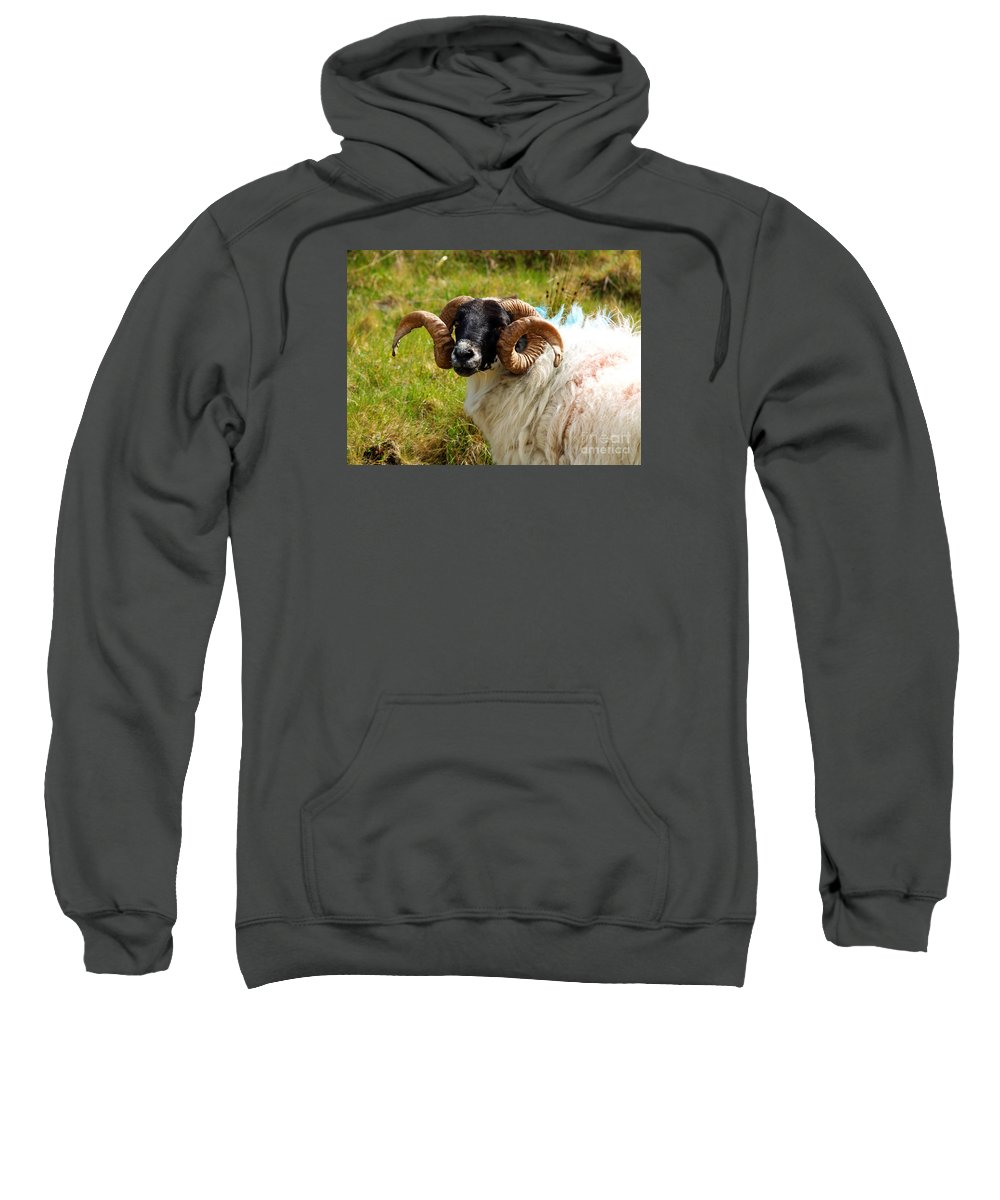 Fine Art Photography Sweatshirt featuring the photograph Lunchtime by Patricia Griffin Brett