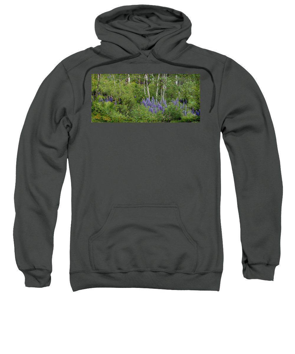 Aspen Sweatshirt featuring the photograph Lupine And Aspens by Heather Coen