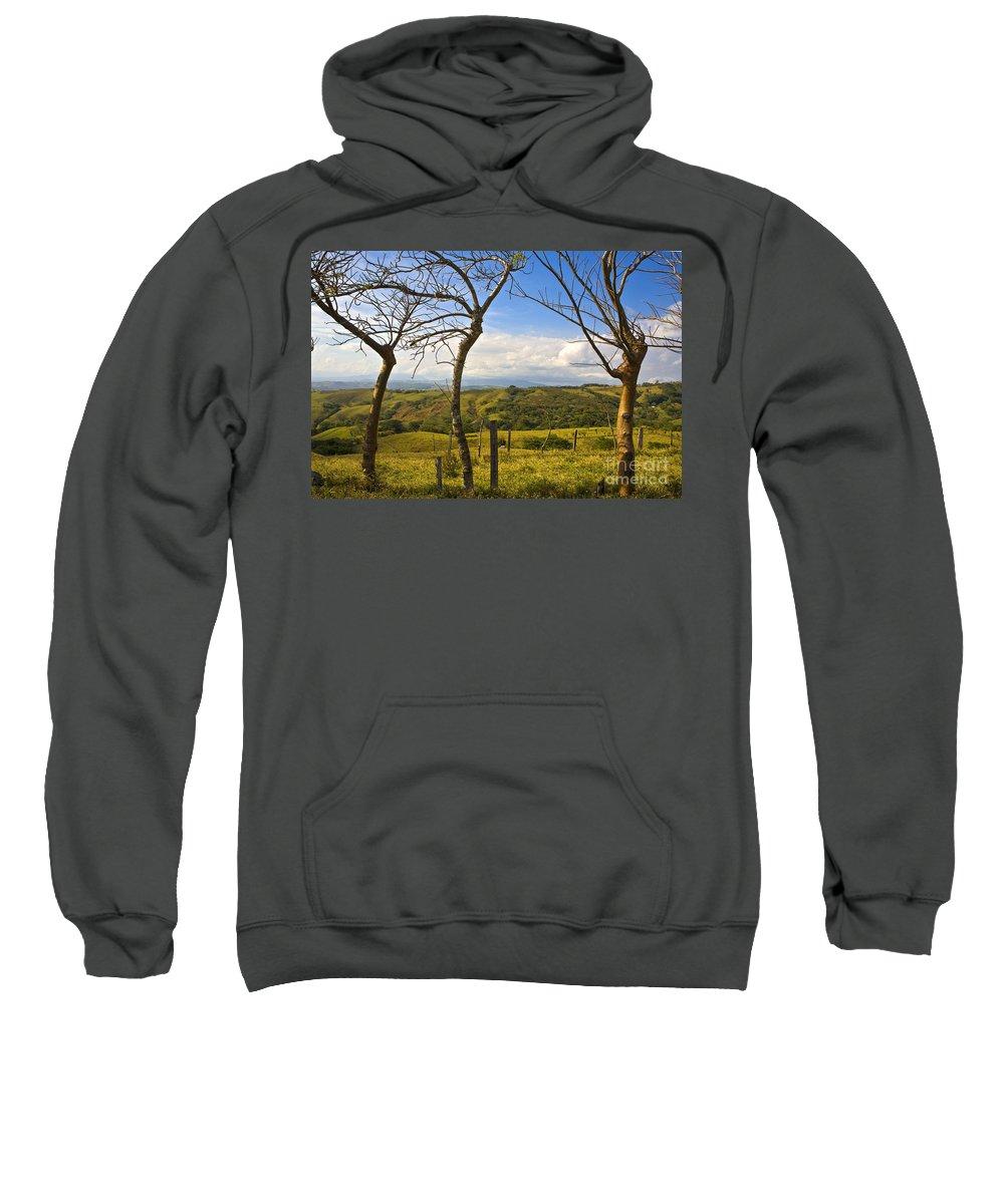 Tree Sweatshirt featuring the photograph Lush Land Leafless Trees I by Madeline Ellis