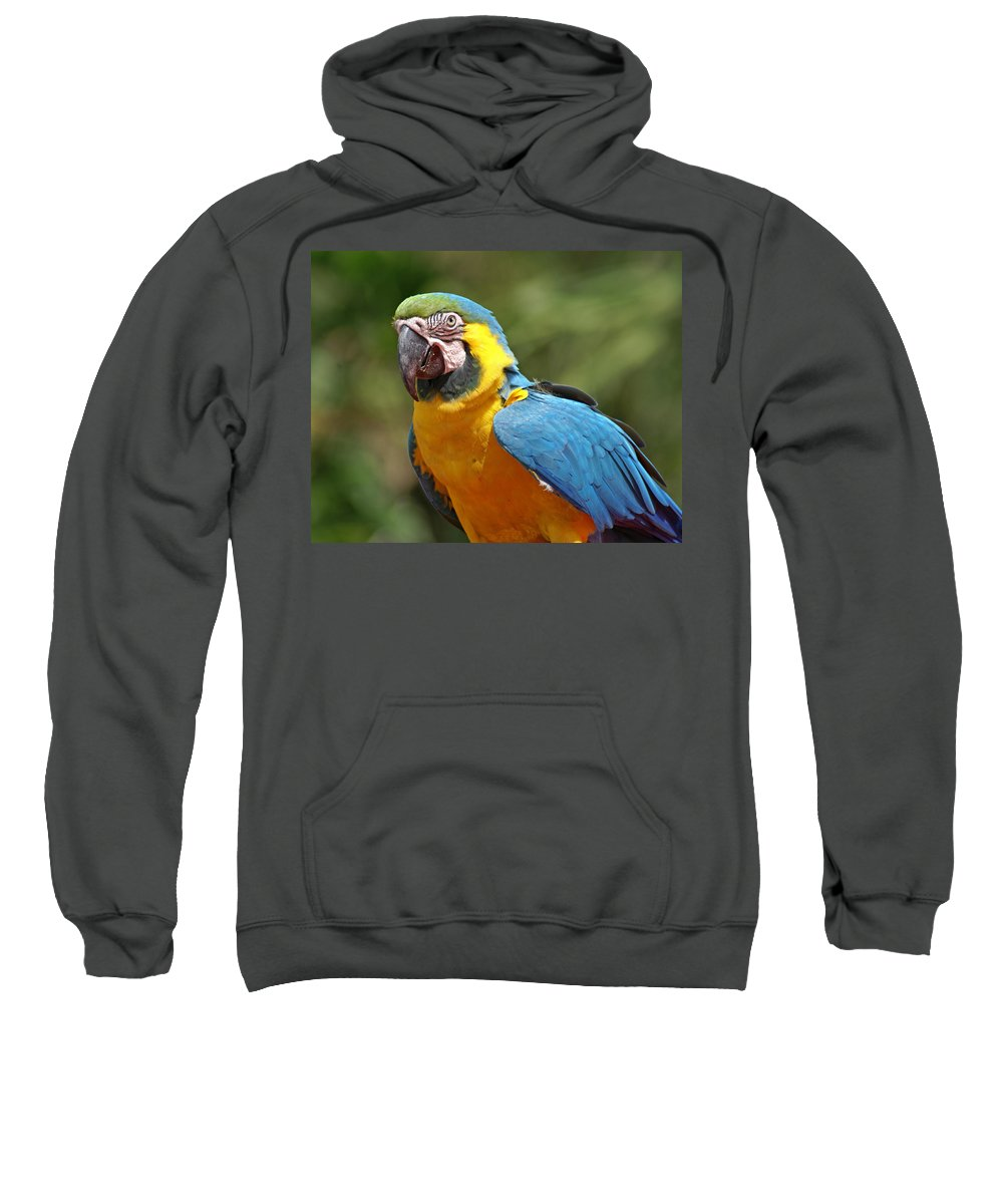 Parrot Sweatshirt featuring the photograph Macaw by Heather Coen