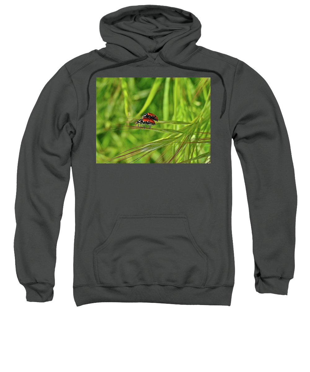 Insects Sweatshirt featuring the photograph Macro Acrobats by Diana Hatcher