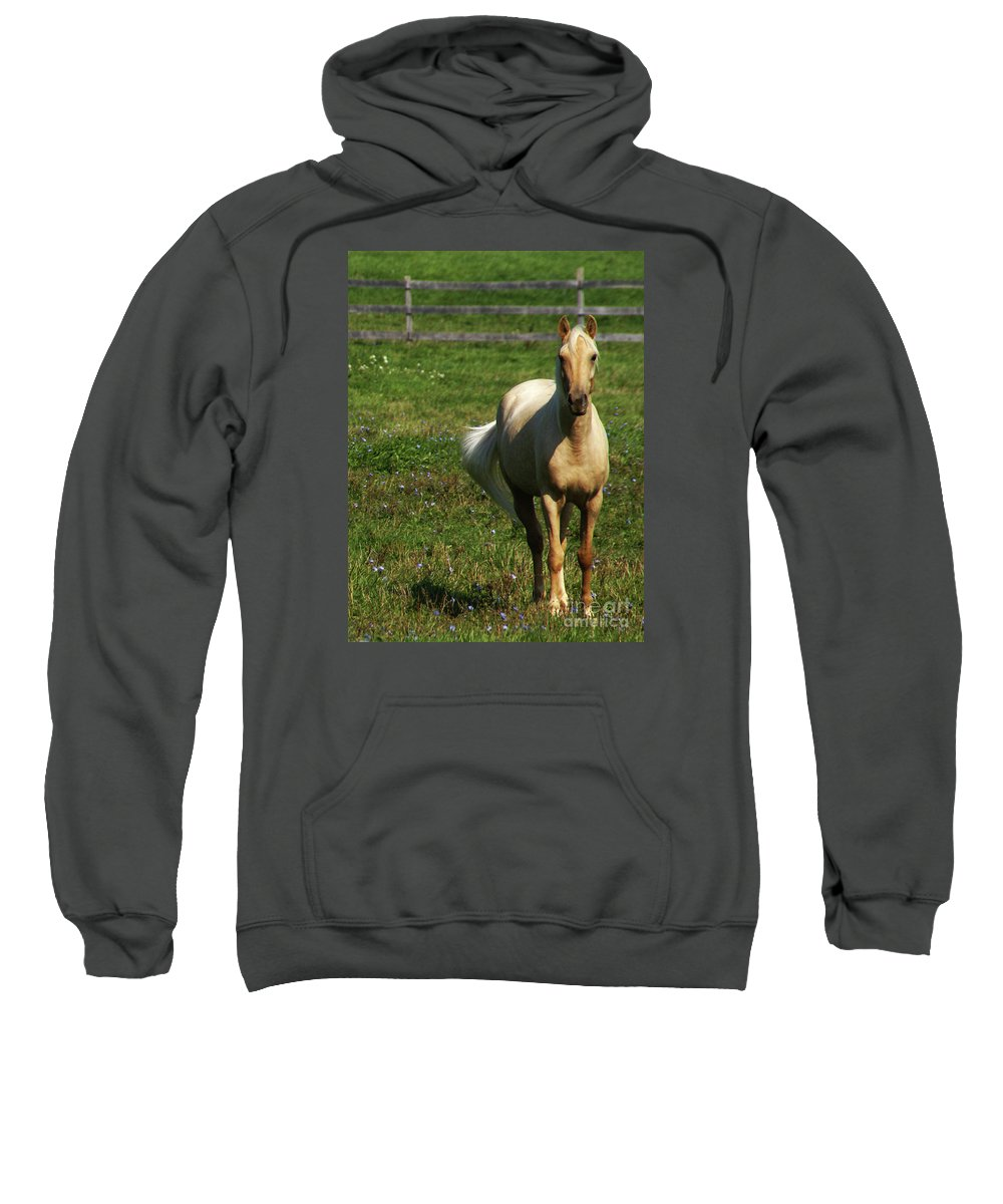 Horse Sweatshirt featuring the photograph Maggie - Michigans Morning Breeze by Linda Shafer