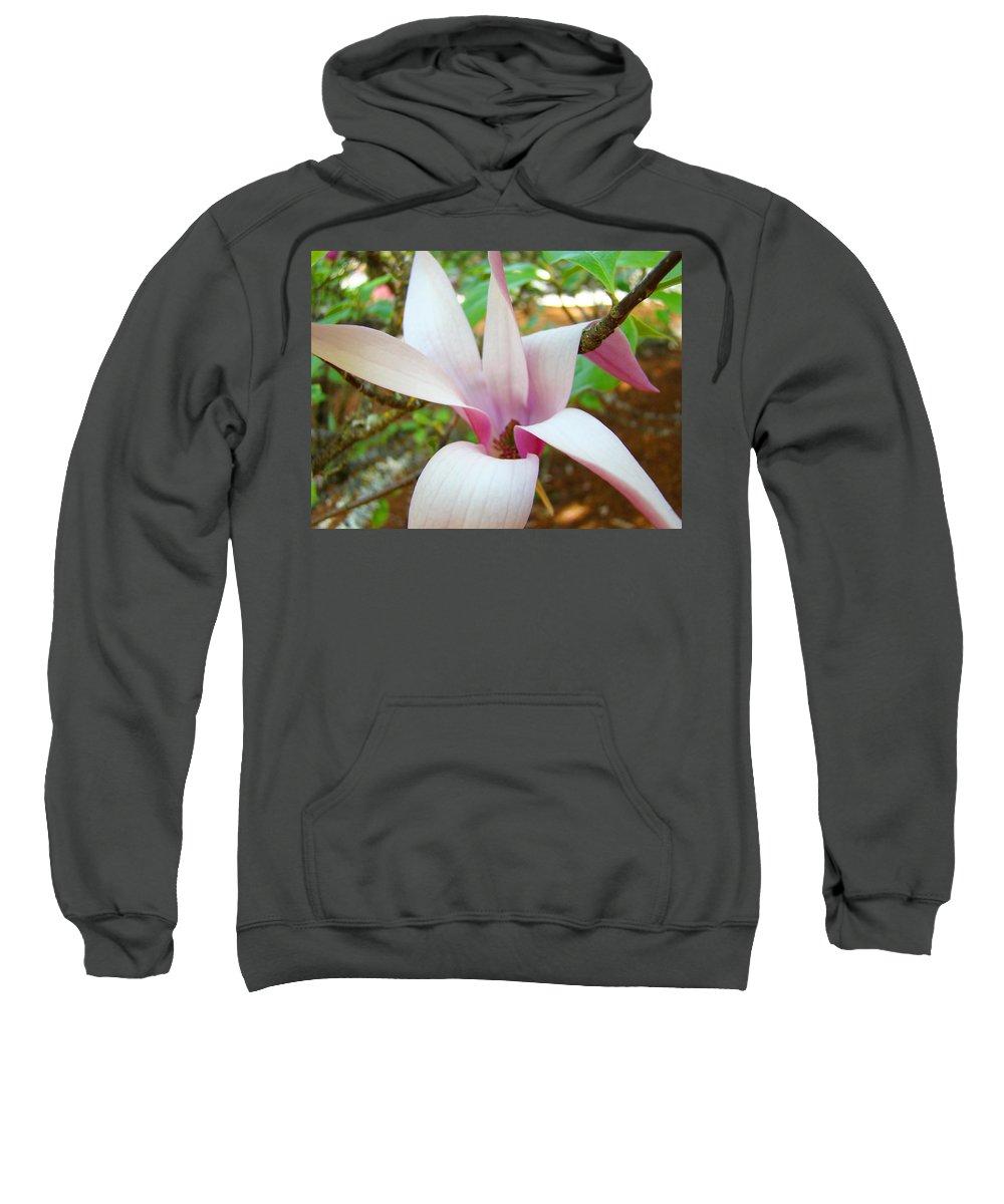 Magnolia Sweatshirt featuring the photograph Magnolia Flowering Tree Art Prints White Pink Magnolia Flower Baslee Troutman by Baslee Troutman