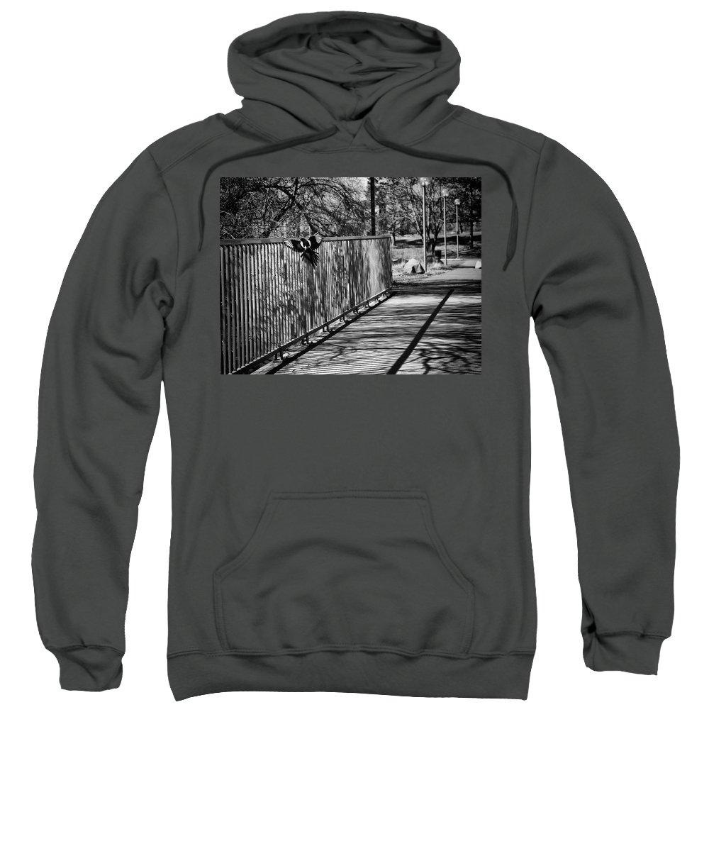 Magpies Photographs Hooded Sweatshirts T-Shirts